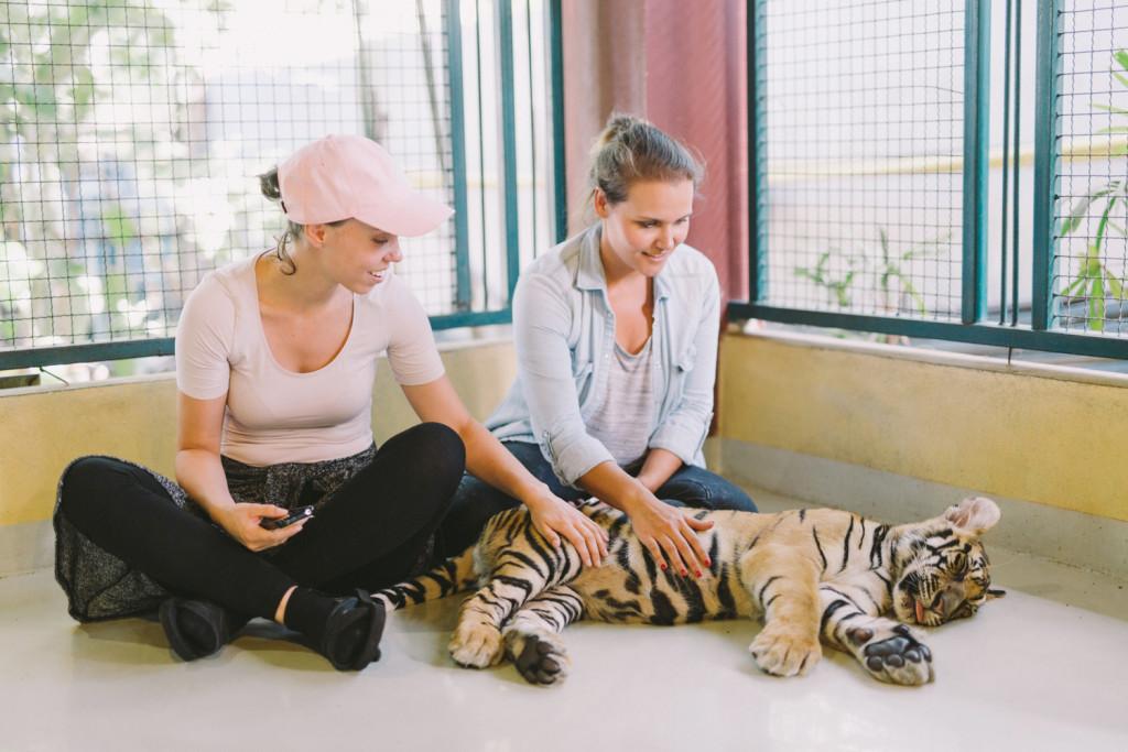 Tiger_Kingdom_ChiangmAI