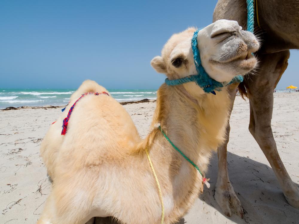 tunizija_2_shutterstock_14007682