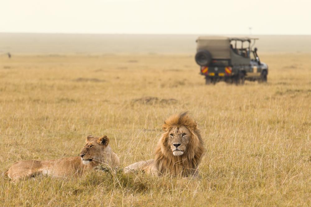 safari_shutterstock_136561616