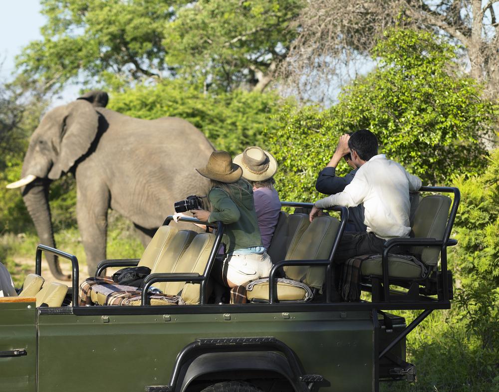 safari_shutterstock_145434622