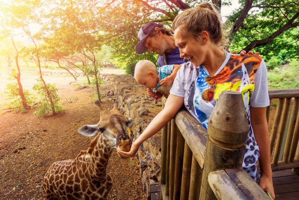 safari_shutterstock_372305713