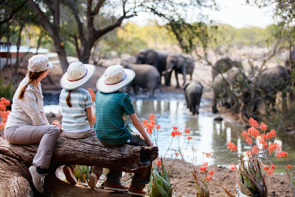 safari_shutterstock_482050255