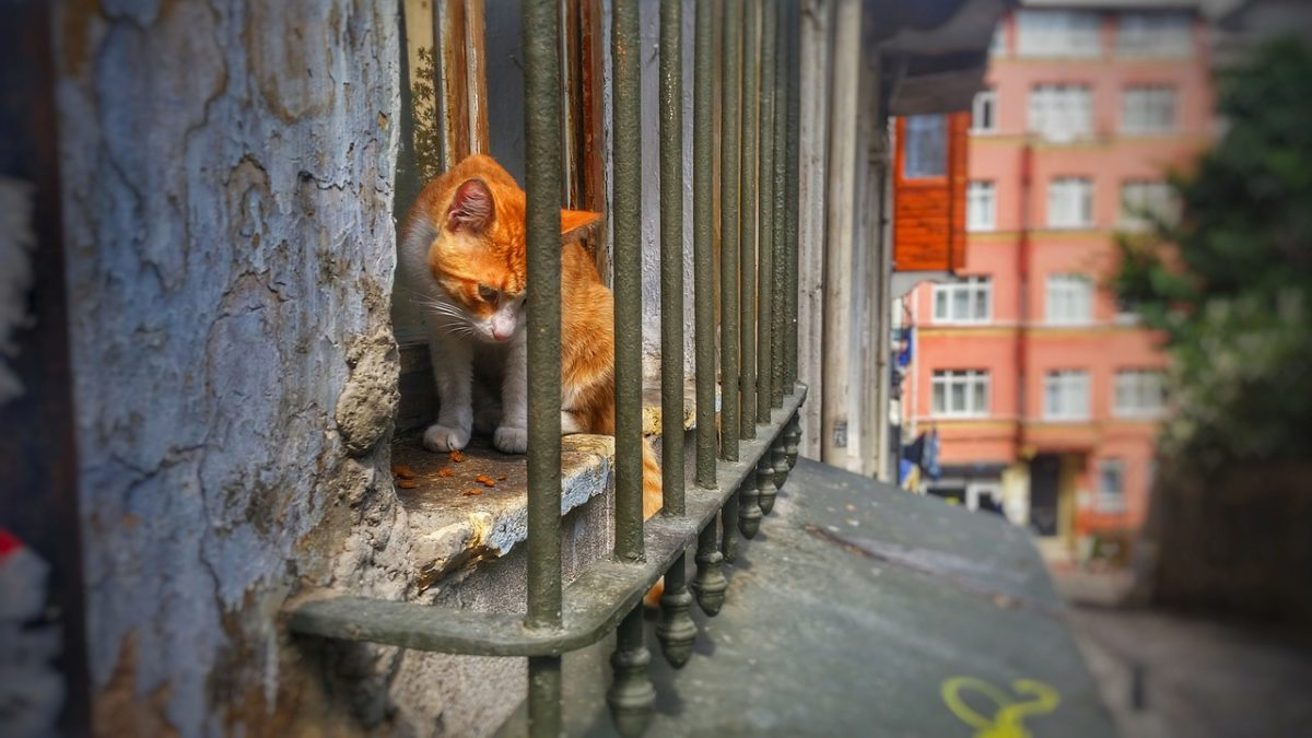 cats - of - istanbul